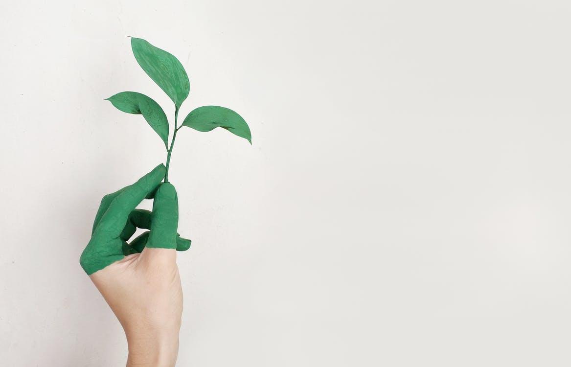 medio-ambiente-reydeman